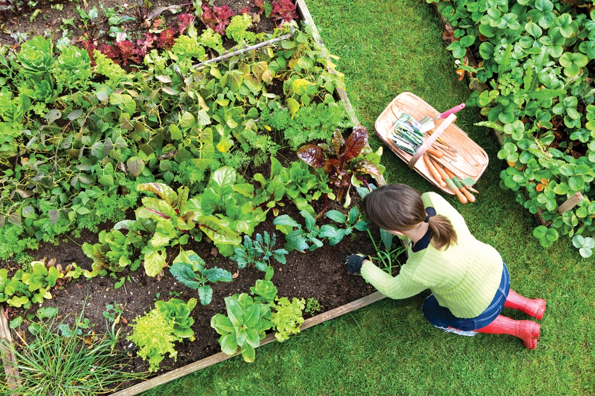 The how to guide for creating a flourishing vegetable garden for Vegetable garden